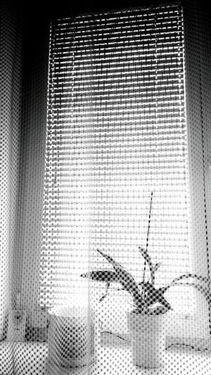 Window Indoors  No People Day Close-up Blinds Reptile Blackandwhite Photography First Eyeem Photo