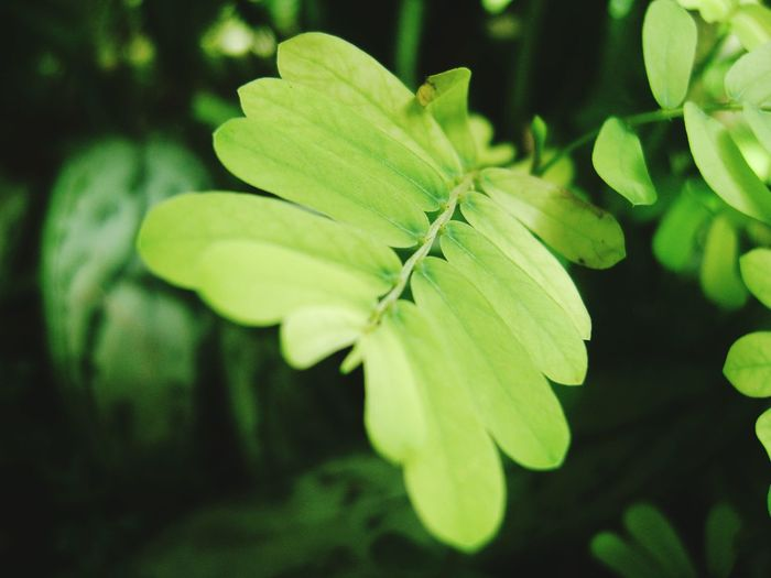 Beauty In Nature Green Color EyeEm Nature Lover