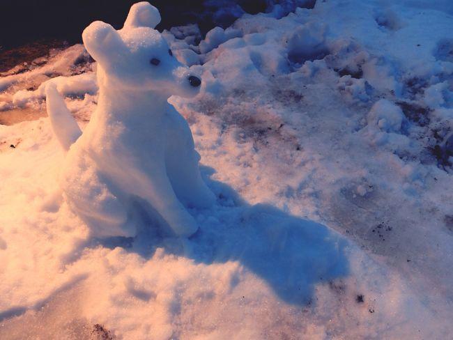Snow Enjoying Life