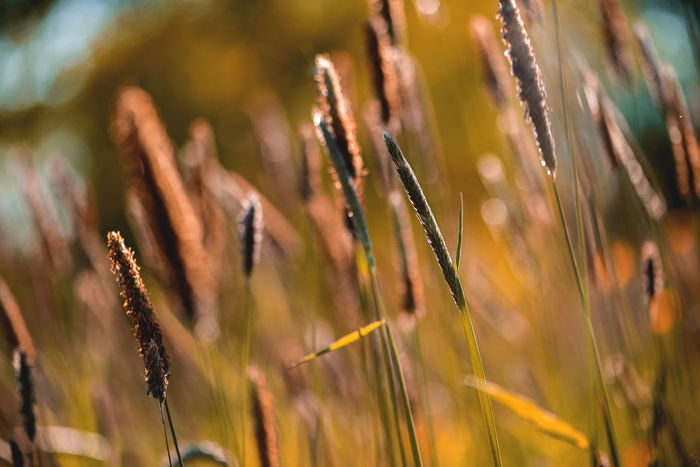 Abstract Background Beauty In Nature Bent Brown Cattail Close-up Color Game Concept Day Field Grass Growth Melancholy Nature Nature No People Outdoors Plant Summer Meadow Sunny Tranquility Sommergefühle
