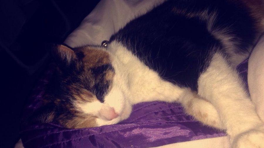 Cat Cat Life Love My Cat Cute Cat Grown Up Angel My Princess Cats Sleeping Sleeping Cat