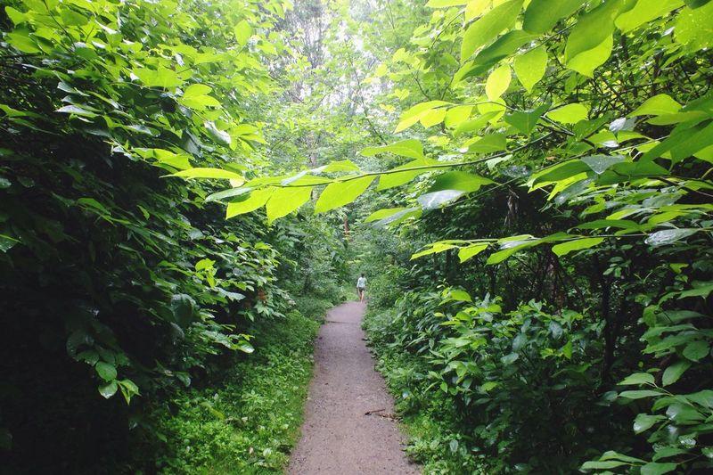 Walking Forest Walking Around Pittsburgh Urban Nature