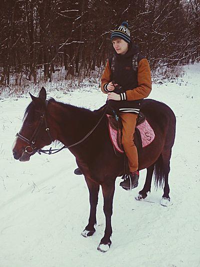 Horse Winter Snow Wood First Eyeem Photo