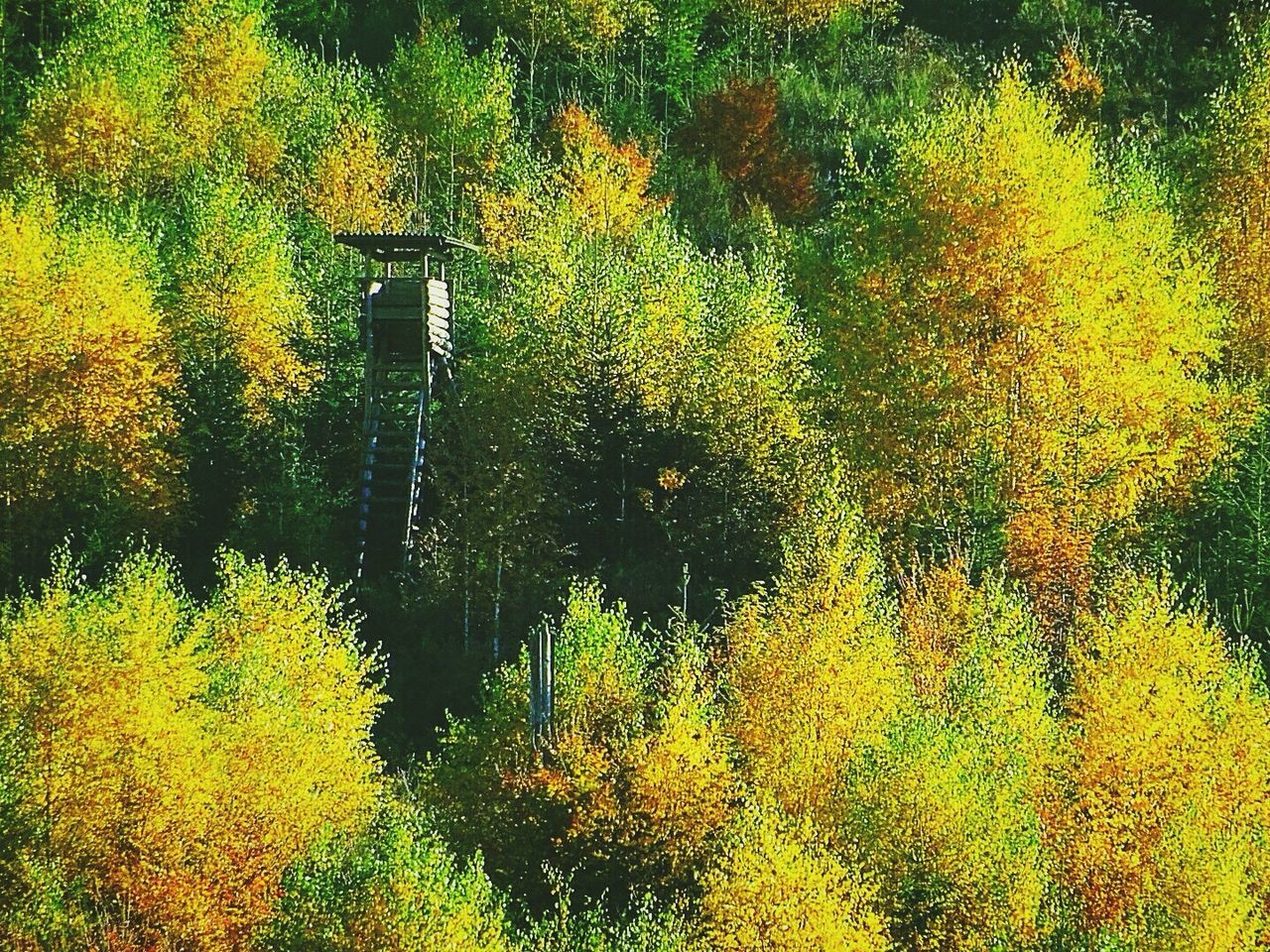 tree, autumn, leaf, nature, change, beauty in nature, yellow, forest, growth, tranquil scene, outdoors, tranquility, scenics, lush foliage, no people, plant, day, green color, lake, water