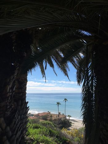 View through the palms Palm Tree Palm Trees Tree Trees Beach Beachphotography Beach Photography Beach Life Beach Day Overhead View Sea Beauty In Nature Nature Tranquil Scene No People Water Ocean Ocean View California San Juan Capistrano Outdoors Tranquility Peace Calm Scenics