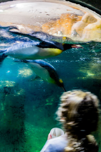 Excited young child playing with penguins through porthole window. Omaha, Nebraska Action Blur Animal Themes Aquarium Child Jumping Up And Down Close-up Day Fish Indoors  Large Porthole Window Nature One Person Penguins Swimming Past Window Penquins Real People Sea Life Swimming Unrecognizable Child Water