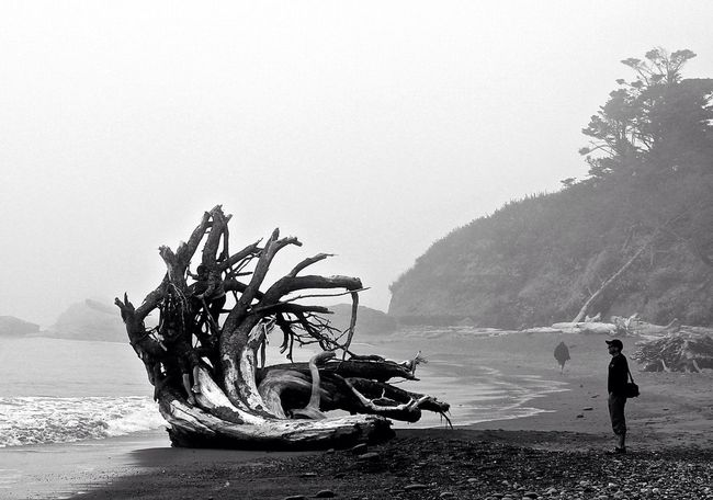 Ruby Beach Nationalpark Beach Day Beach Photography Wildnature Foggy Morning Foggy Day Rubybeach USA On The Beach Capture The Moment Ruby Beach Telling Stories Differently Monochrome Photography
