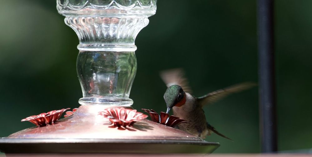 Close-up of bird on glass table