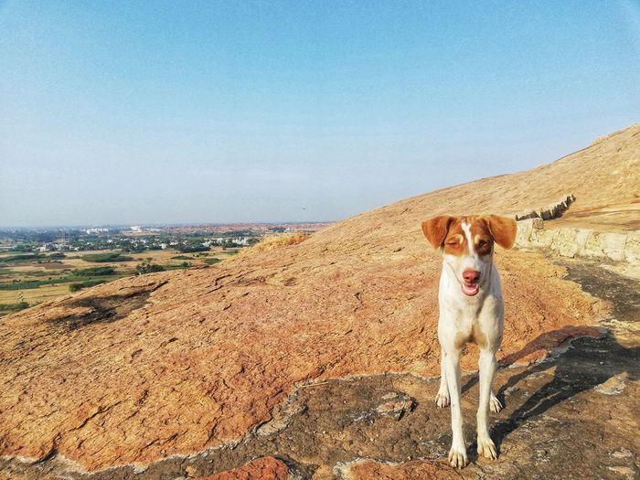 Portrait of a dog on landscape