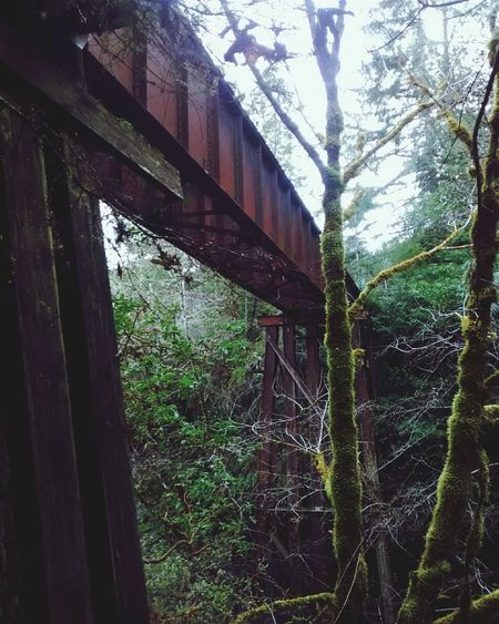 old train bridge. Oregon Coast Oregon Rainforest Scenic View Day No People Low Angle View Outdoors Growth