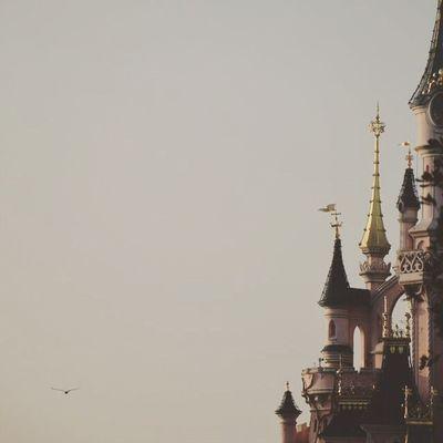 Magic Disneyland ✨💕 12mars2016 Nikon5300 Bird Sky Castle Disneyland Disneyland