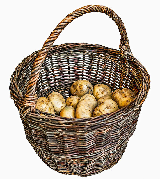 Harvested potatoes in an old wicker basket isolated on white Basket Bread Cut Out Day Food Food And Drink Foraging Freshness Fruit Healthy Eating No People Picnic Picnic Basket Raw Potato Shopping Basket Whicker White Background Wicker