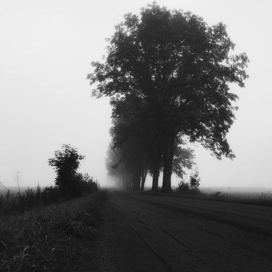 Fog Dawn Daybreak Foggy Street Trees Black & White IPSScenery Poland Morning IPS2015Fall IPS2016Landscape