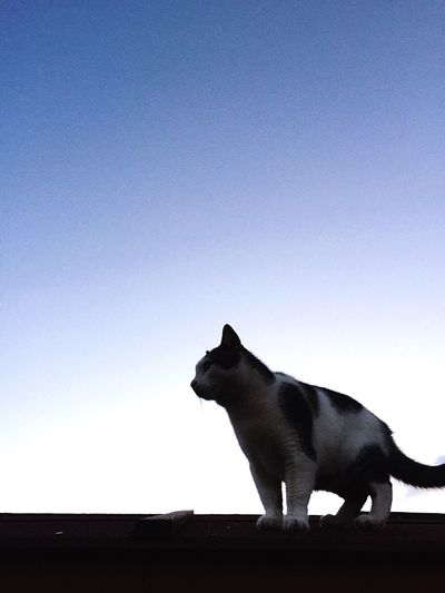 Cat Ninja Style MyLove❤