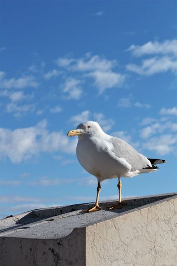 Seagull looking over Rome, Italy Animal Themes Bird Vertebrate Animal Animals In The Wild Sky One Animal Animal Wildlife Day Seagull White Color Nature No People Perching Cloud - Sky Beak White Orange Color Marble Italy Blue