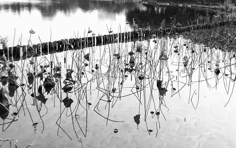 Waterlily Lotus Lake View Reflection Sony Xperia XperiaZ5 Black And White Bnw_collection NEM Black&white Noiretblanc Bnw_captures Bw_collection Black & White Noir Et Blanc Black & White Photography Monochrome Lake Streetphotography Street Photography Lensculture Guangzhou Canton Travel Destinations Tranquility China