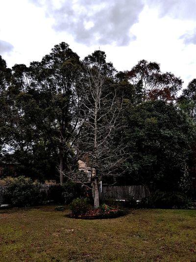 Tree Pixelated