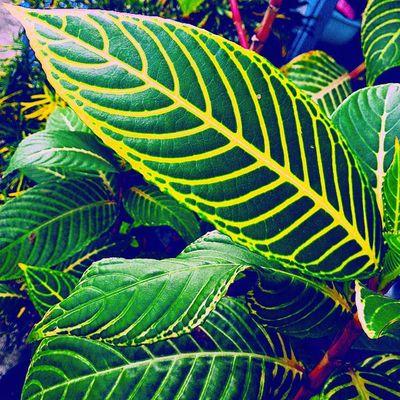 Hijau daun atau daun hijau? Daun Hijau Hijaukuning Leaf green fresh