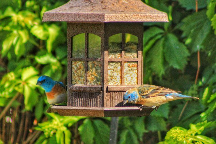 Birds On Feeder Against Plants