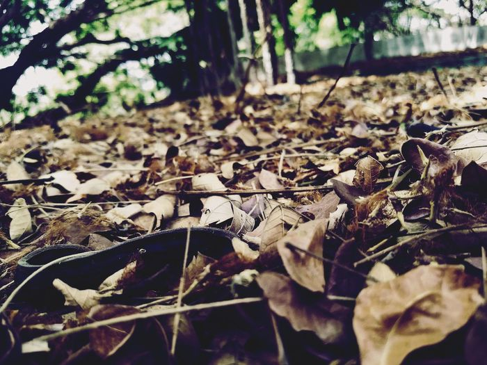 Dried Leaves EyeEm Selects Mobile Photography Moto G5plusClick Close-up Blooming Leaves Fallen Leaf Change Dried Pollen Growing Fall Leaf Vein Camera Film EyeEmNewHere