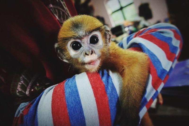 Malaysia Baby Monkey Cute