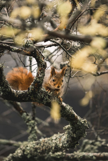 Animal Themes Animal Wildlife Animals In The Wild Beauty In Nature Branch Close-up Day Mammal Nature No People One Animal Outdoors Red Panda Squirrel Tree
