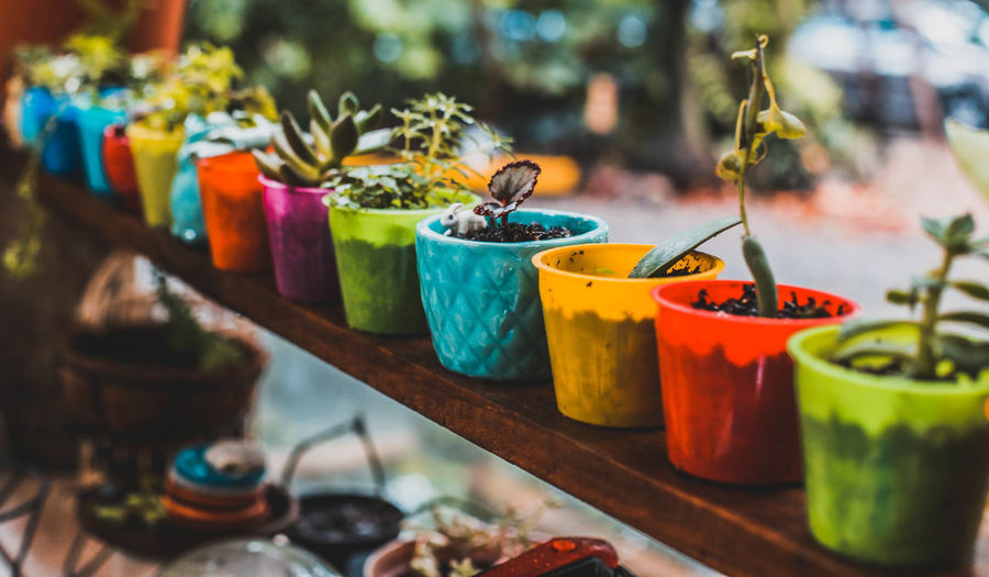Close-up of potted plants arranged on table