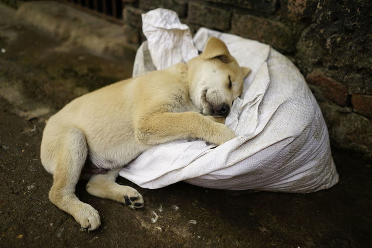 Sleeping dog ~ One Animal Animal Themes Relaxation Sleeping Mammal No People Nature Domestic Animals Animals In The Wild Pets Day Sony SONY A7ii 28mm Lens Full Frame