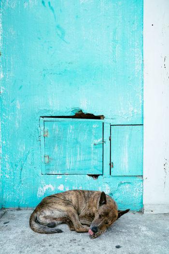 Cat lying on blue door