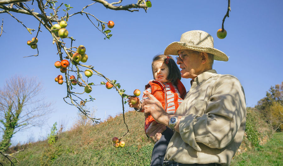 Grandfather With Granddaughter Picking Apple On Tree