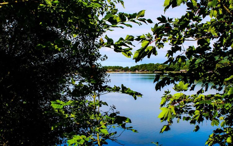Tree Nature Lake Water Leaf Reflection Beauty In Nature Growth Scenics Green Color Tranquility Tranquil Scene Plant Sky Outdoors No People Day Blue Branch Lancashire UK