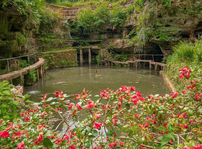 Flowering plants by lake
