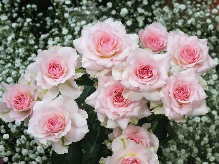 薔薇 Enjoying Life Flower Beautiful Flower Flowers Cute♡