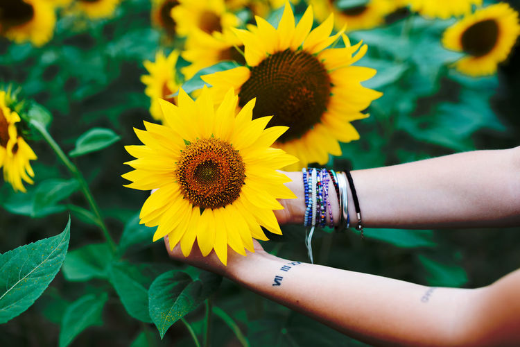Carpe Diem Carpe Diem Country Green Color Yellow Flower Bracelet Campagne Campagnefrançaise Champ Country Life Countryside Fleurs Flower Flower Head Flowering Plant Fragility Hand Nature Outdoors Sunflower Tatouage Tattoo Tournesol Vulnerability  Yellow Yellow Color A New Beginning 50 Ways Of Seeing: Gratitude A New Perspective On Life Human Connection My Best Photo