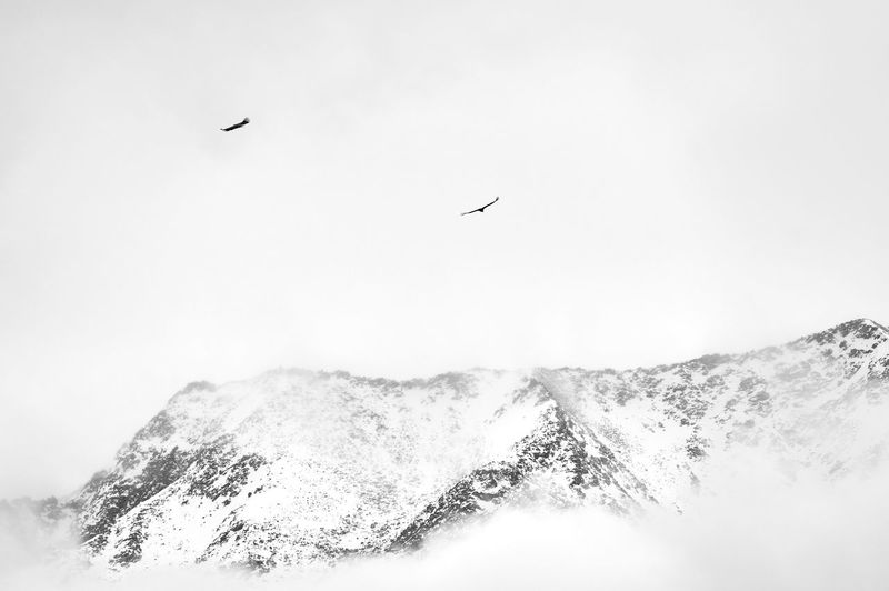 Snow mountain, bird, sky, flying China Landscape Mountain Sky Beauty In Nature Scenics - Nature No People Nature Day Snow Snow Mountain Fog Cloud - Sky Cloud Bird Travel Freedom Snowcapped Mountain Flying Animal Animal Themes Vertebrate Animals In The Wild Animal Wildlife Tranquil Scene Spread Wings Tranquility Outdoors