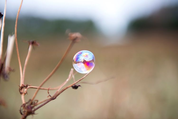 Focus On Foreground Fragility Vulnerability  Close-up Nature Transparent A New Beginning Day No People Outdoors Beauty In Nature Single Object Bubble Sphere Shape Plant Multi Colored Geometric Shape Glass - Material