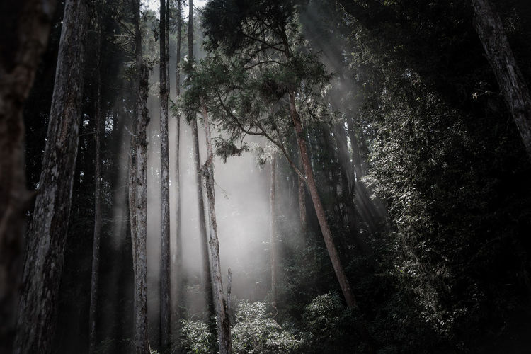 the misty forest Beauty In Nature Day EyeEm Best Shots EyeEm Nature Lover Forest Growth Holy Spirit Landscape Light And Shadow Mist Nature No People Outdoors Scenics Sky Tranquil Scene Tranquility Tree Tree Trunk Water TCPM