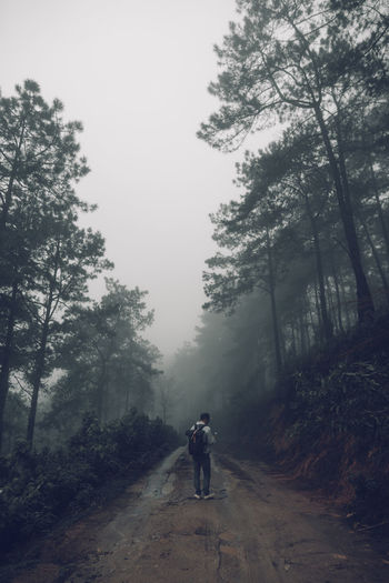 Forest road Fog and rain in the evening Tree Plant One Person Fog Real People Leisure Activity The Way Forward Forest Full Length Road Nature Lifestyles Transportation Direction Growth Day Sky Rear View Outdoors WoodLand Riding