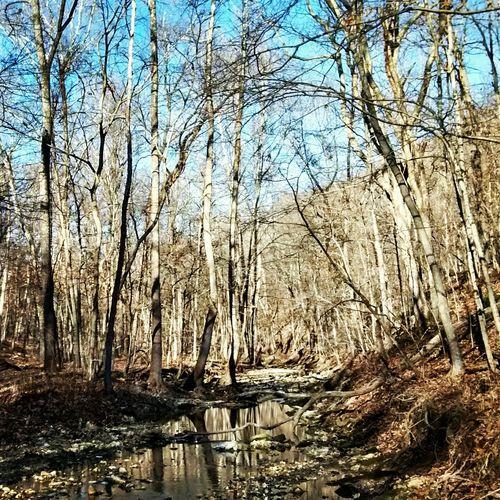 Lost Valley Mtn Biking Weldon Spring