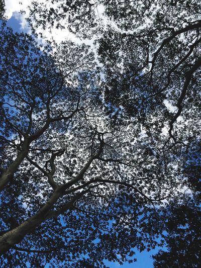 I love overhead