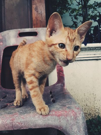 Animal Cats Cat Animals Cats 🐱 Cat Lovers Cat♡ Pets Leopard Close-up Cat Kitten