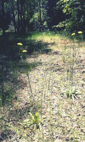 Flowers Forest Sukholuch'ye Natural Beauty Ukraine