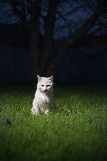 Portrait of a cat on field