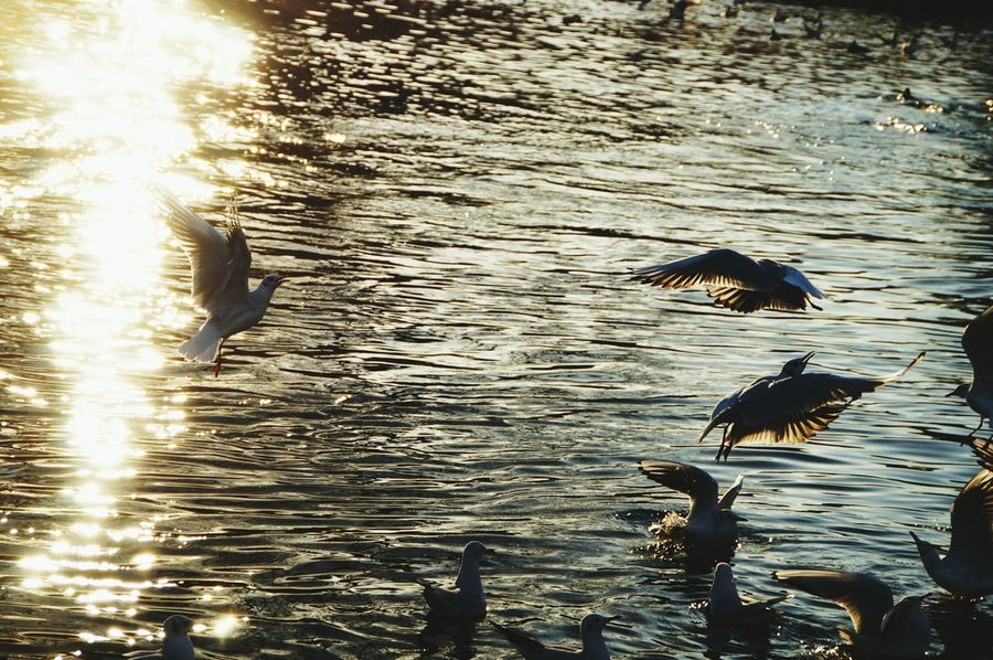 Water Bird Lake Animal Themes Animals In The Wild Animal Wildlife No People Nature Outdoors Sunset Day Beauty In Nature Gulls St James's Park London Fighting For Food EyeEmNewHere