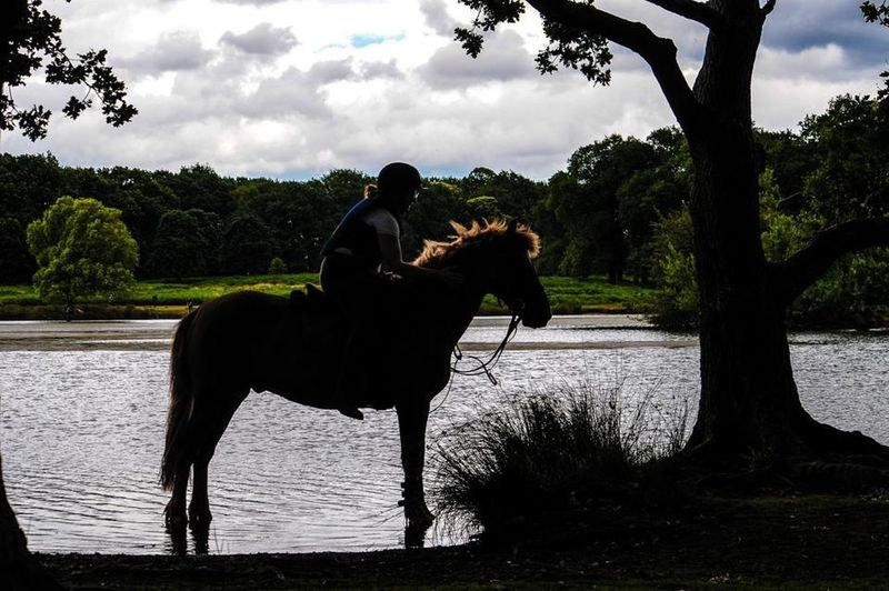 Animal Horse Horseriding Nature Nature Richmond Park, London Rider Tree Water Wildlife