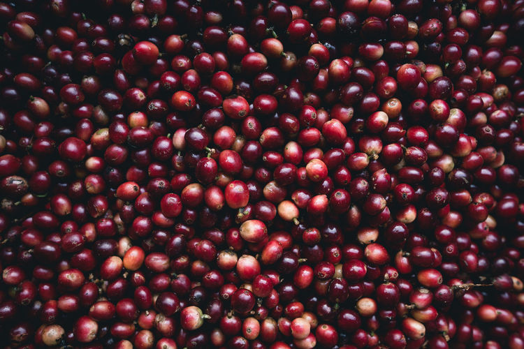 Full frame shot of cranberries for sale at market stall