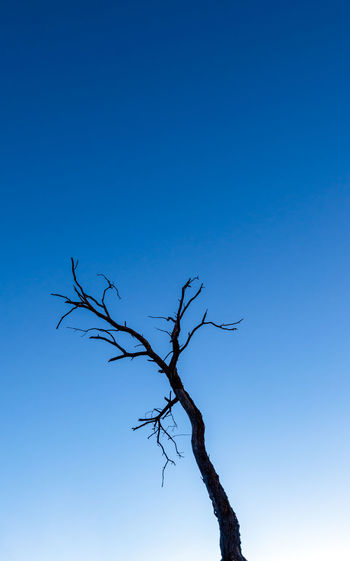Silhouette of a bare tree against the sky Silhouette Silhouettes Spooky Trees Bare Tree Beauty In Nature Blue Branch Clear Sky Creepy Creepy Places Day Dead Plant Dead Tree Lone Low Angle View Nature No People Outdoors Silhouette And Sky Silhouette_collection Silo Sky Spooky Tranquility Tree