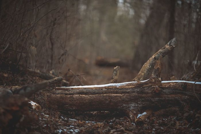 Nature Nature_collection Moodygrams Moody Somber WoodLand No People Nature Branch Tree Trunk Tree Outdoors Day Forest Dead Tree Close-up