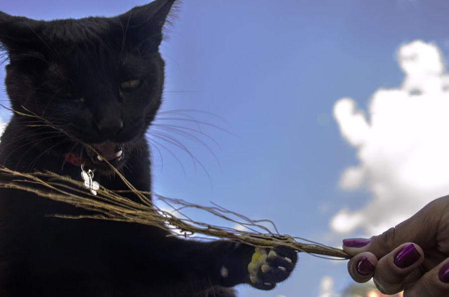 Cat Cat♡