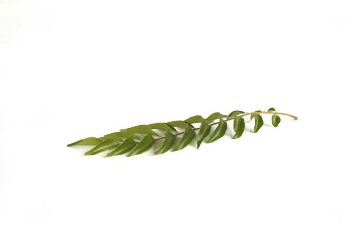 curry leaves isolated over white background Aromatic Ayurveda Ayurvedic Close-up Cooking Cuisine Curry Curry Leaf Freshness Green Color Health Healthy Herb India Indian Ingredient Leaf Medicine Murraya Nature No People Studio Shot White Background